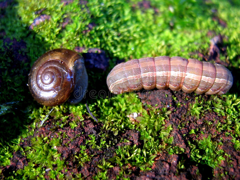 The Clash of Macro Titans. A snail and a caterpillar cross each others paths momentarily scaring each other royalty free stock photos