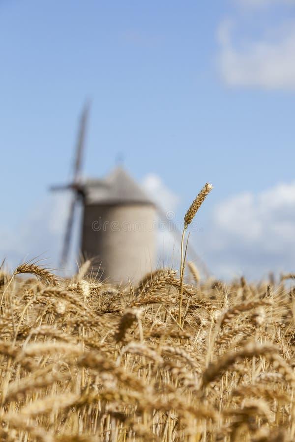Classé des céréales photo libre de droits