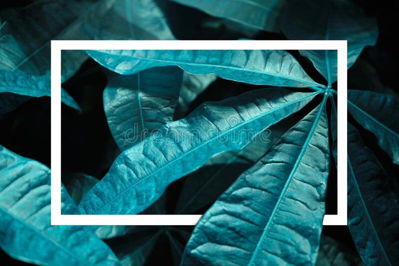 Classic blue background with leaves detail and rectangle. Color of 2020. Close up. Copy space royalty free stock photography