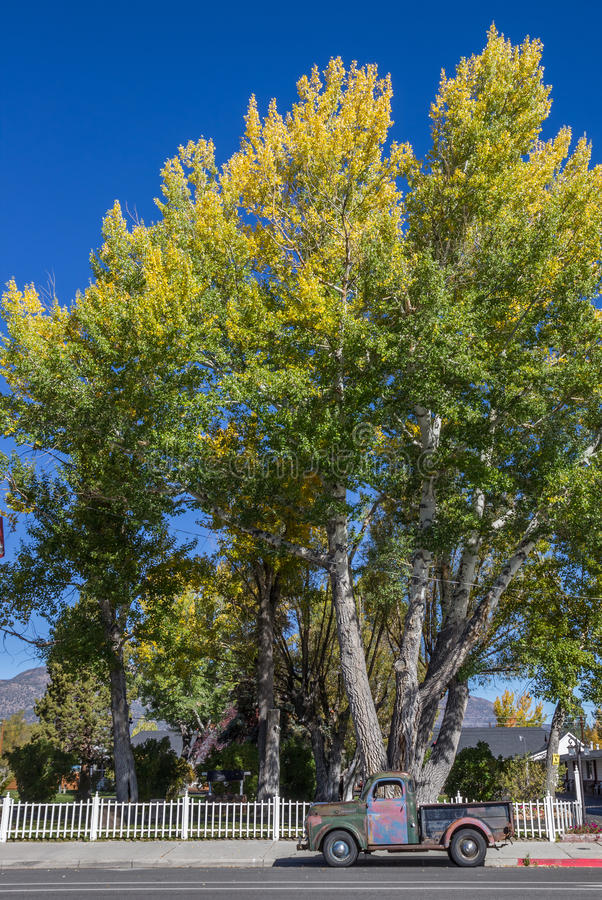 Classic car and fall colors in Bridgeport, California. America royalty free stock photography
