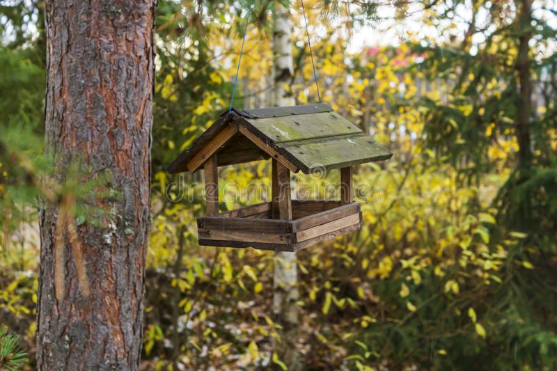 Classic forest bird and squirrel feeder as small gabled house on pine tree royalty free stock image