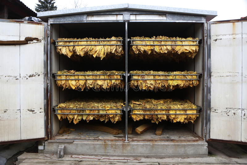 The classic method of drying tobacco in the kiln.  stock photo