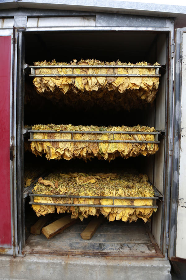 The classic method of drying tobacco in the kiln.  stock image