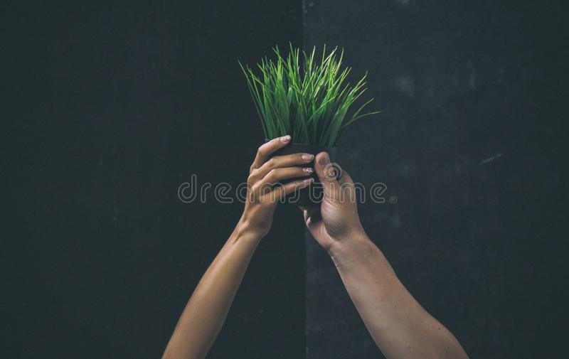 The classic old film design background of the human hands are raising tree pot,the sign and symbol of Save world stock photos