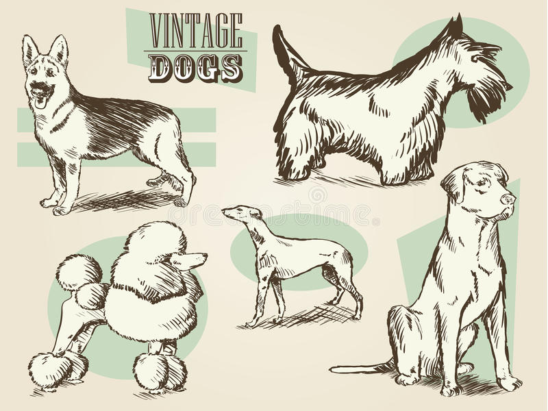 Download Classic Retro Ornate Dog Collection Stock Vector - Illustration: 25292762