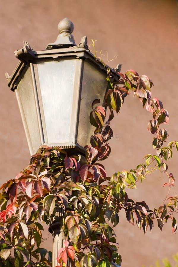 Classic street lantern. With climbing plant stock photography