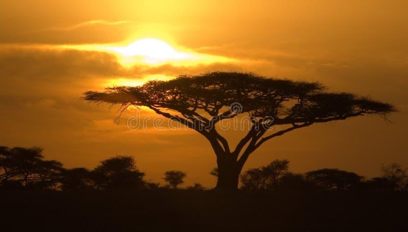Classic Sunrise in Serengeti National Park stock image