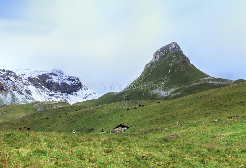 Classic swiss landscape royalty free stock images