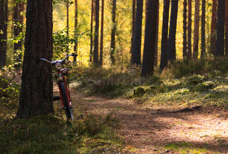 Download Classical bicycle stock image. Image of nature, classical - 12258823