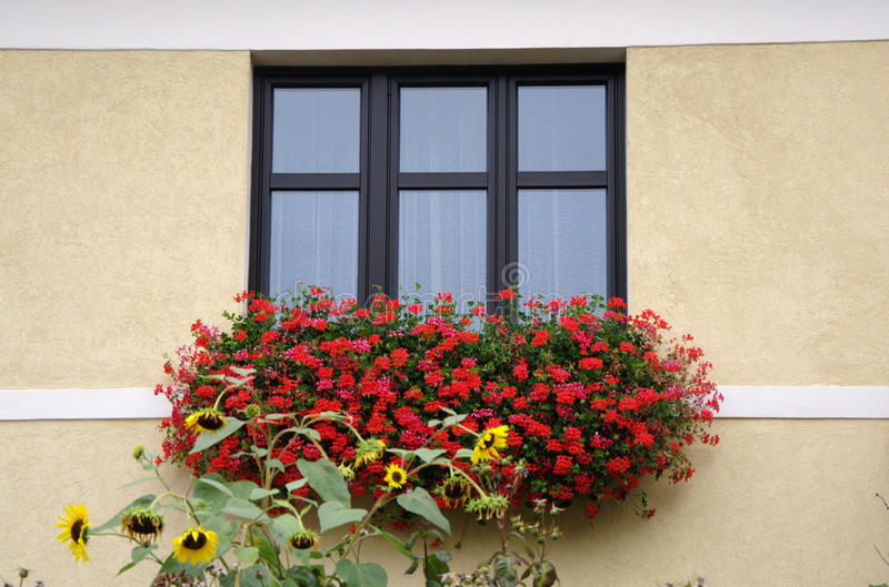 Classical window with red flowers royalty free stock images