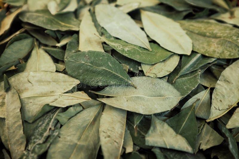 classificar a coca secada folheia em uma cesta tecida pequena foto de stock royalty free