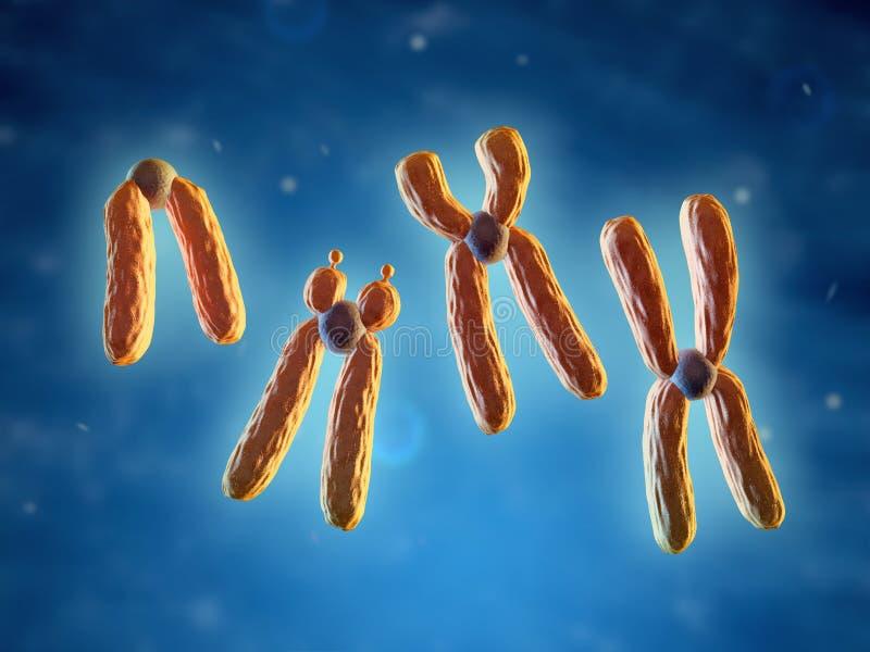 Classificatie van chromosomen vector illustratie