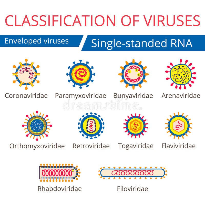 Classification of viruses. Enveloped viruses. stock illustration