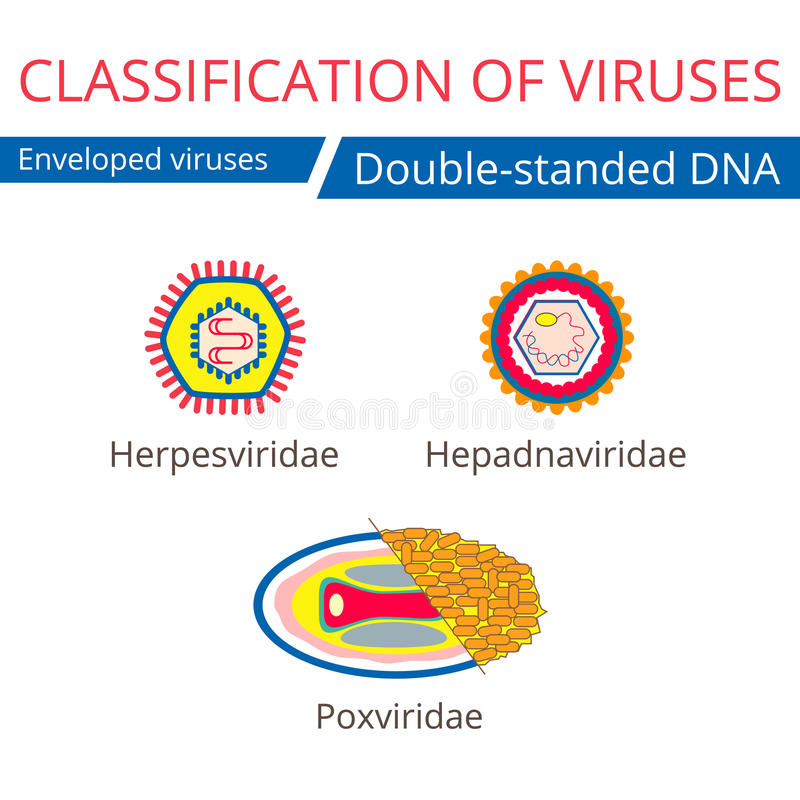 Classification of viruses. Enveloped viruses. royalty free illustration