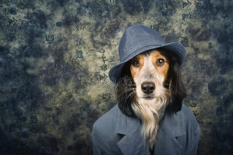Classy Dog Stock Images