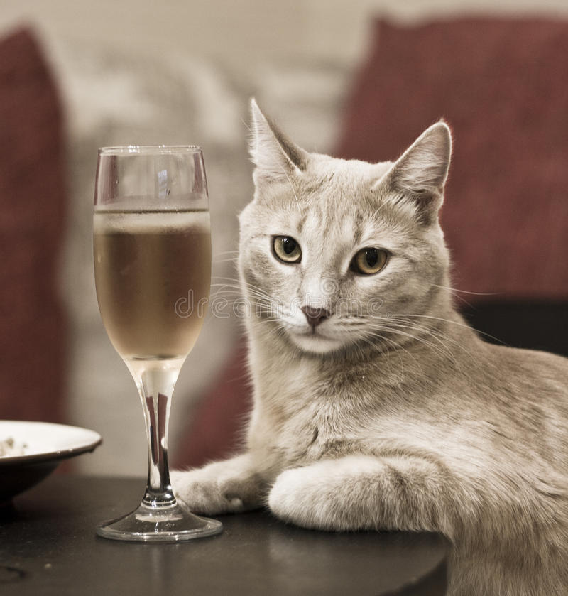 Classy ivory aristocrat sitting at the table with a glass of wine. Home ivory beige sits at the table. On the table is a glass of wine and a plate of food. The stock image