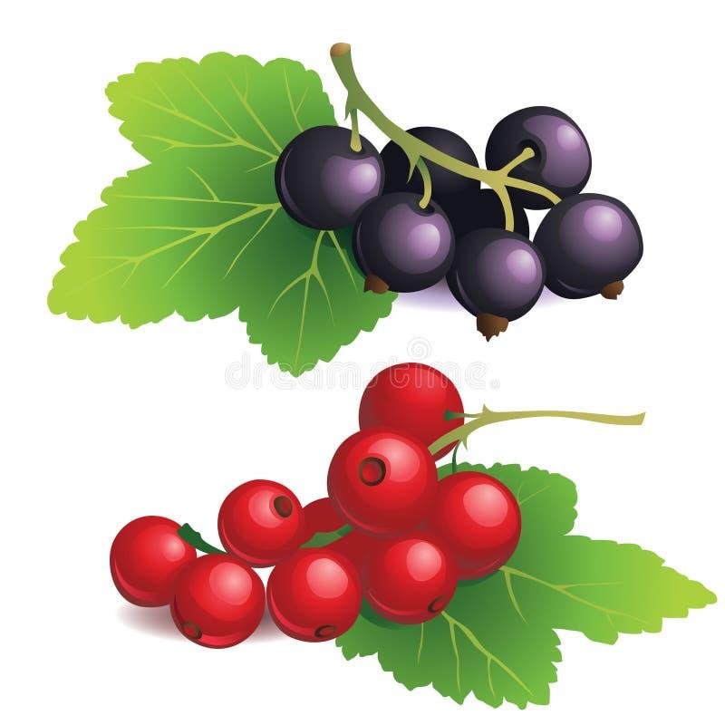 Clasters czarni i czerwoni rodzynki ilustracja wektor