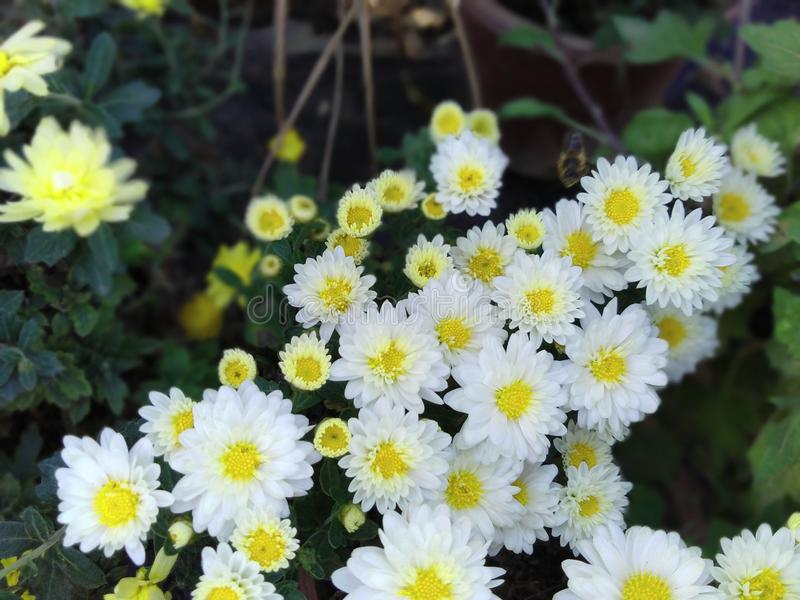 ?clat de fleurs images libres de droits