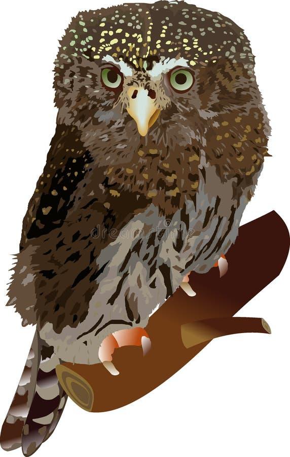 Download Claucidiumpasserinum vektor illustrationer. Illustration av natt - 280258