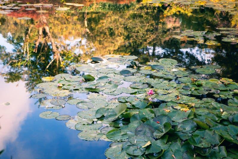 Claude Monet el jardín en otoño, lirios de agua en el lago en un día soleado foto de archivo libre de regalías