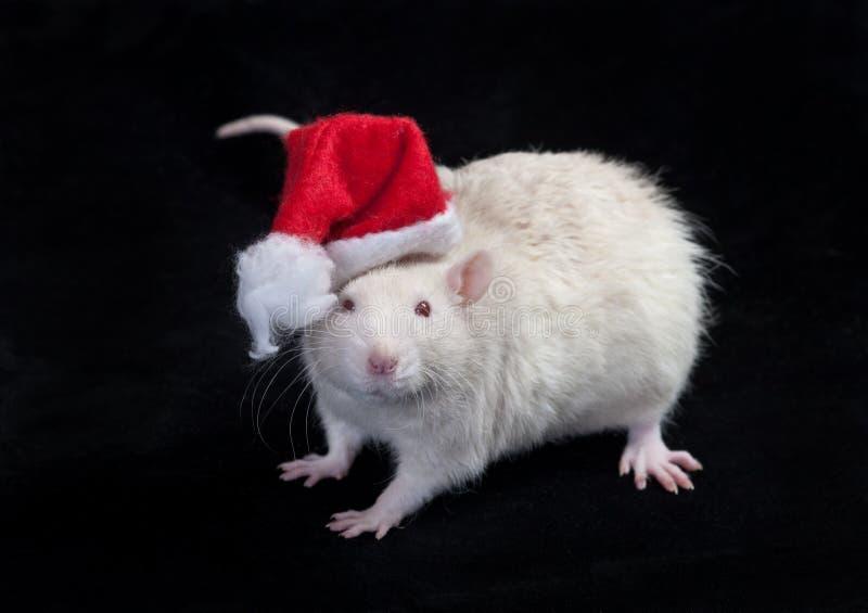 claus Santa mały obraz royalty free