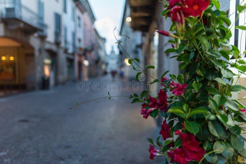 Clausura de flores rojas en el edificio cerca de una calle en Crema, Italia fotografía de archivo