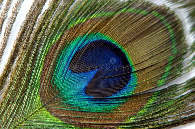Download Clavette 1 image stock. Image du couleurs, abstrait, oiseau - 727007