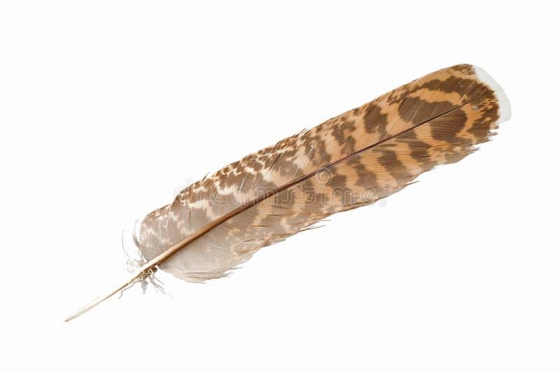 Clavette d'aigle photos libres de droits