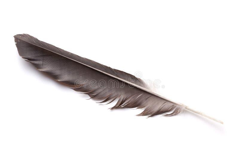 Clavette d'un oiseau photographie stock libre de droits