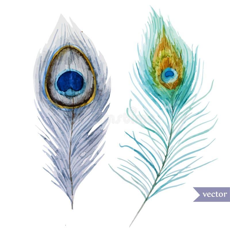 Clavette de paon illustration de vecteur