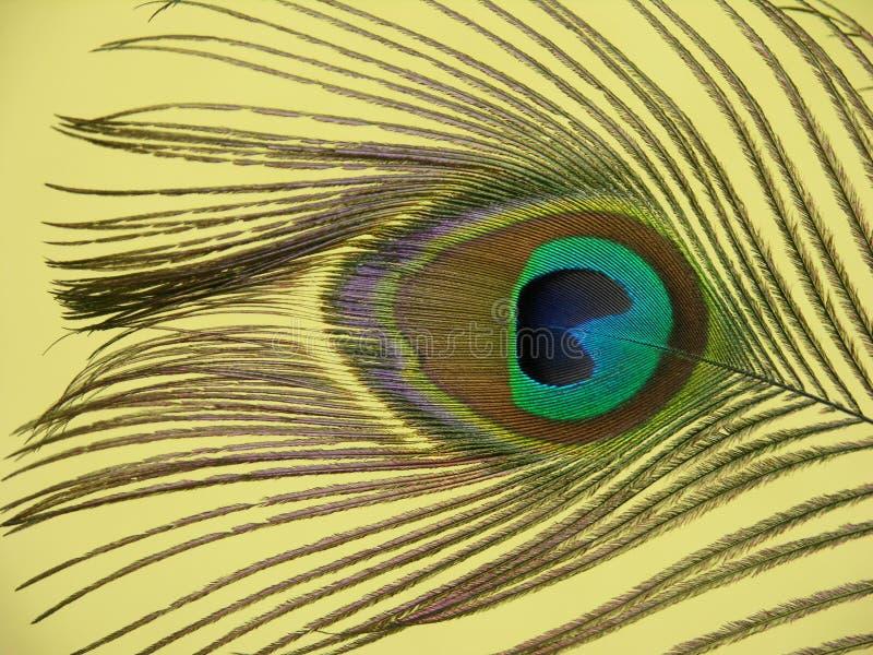Download Clavette de paon image stock. Image du configuration, isolement - 87013