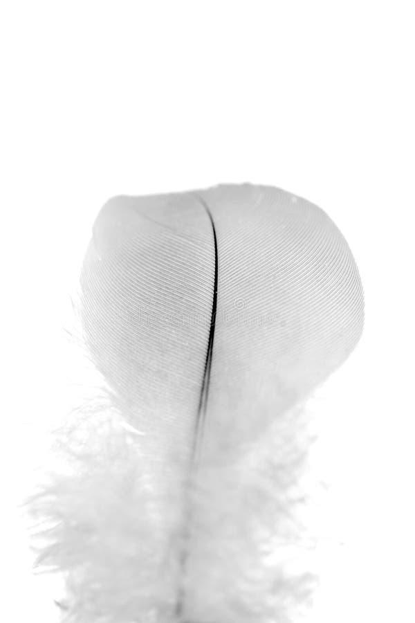 Clavette noire et blanche photo libre de droits
