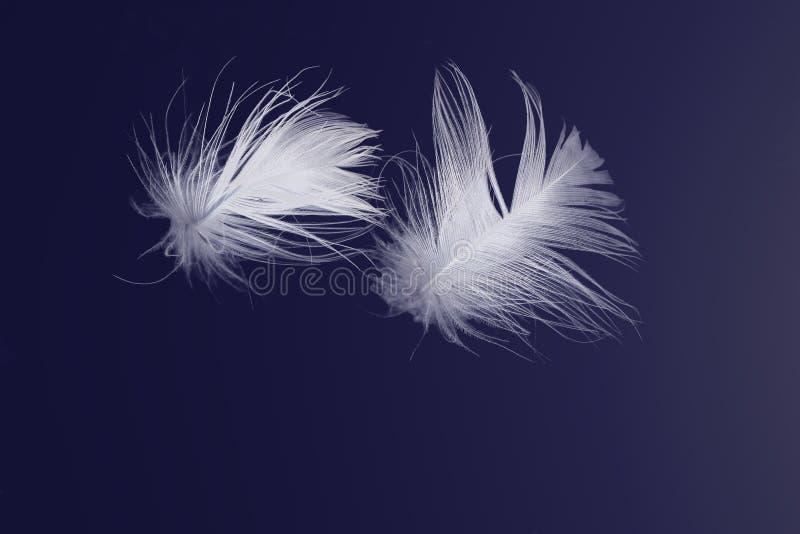 Clavettes blanches flottant sur le bleu illustration libre de droits