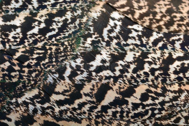 Clavettes vertes de paon photos stock