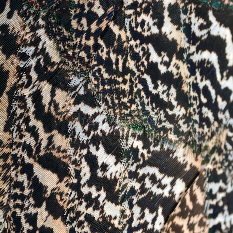 Clavettes vertes de paon photo libre de droits