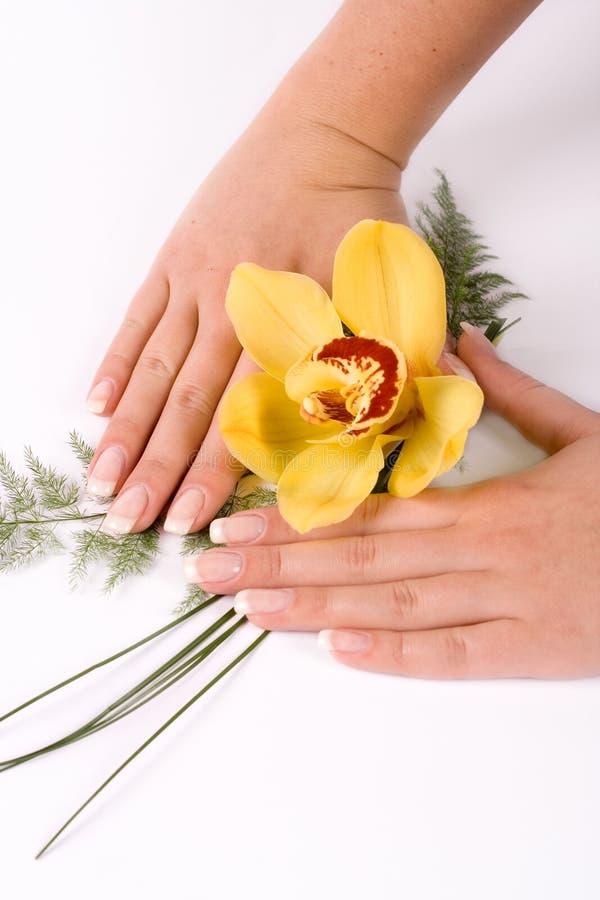 Clavos con la flor imagen de archivo