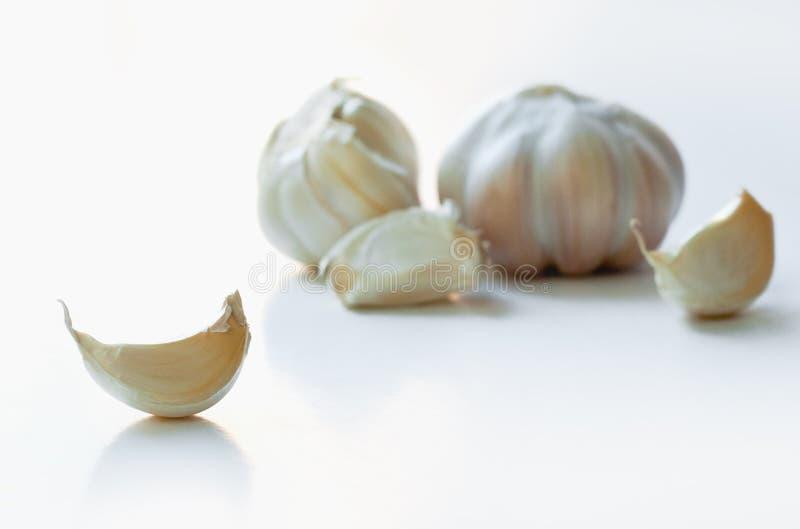 Clavos y bulbo de ajo aislados en blanco imagen de archivo