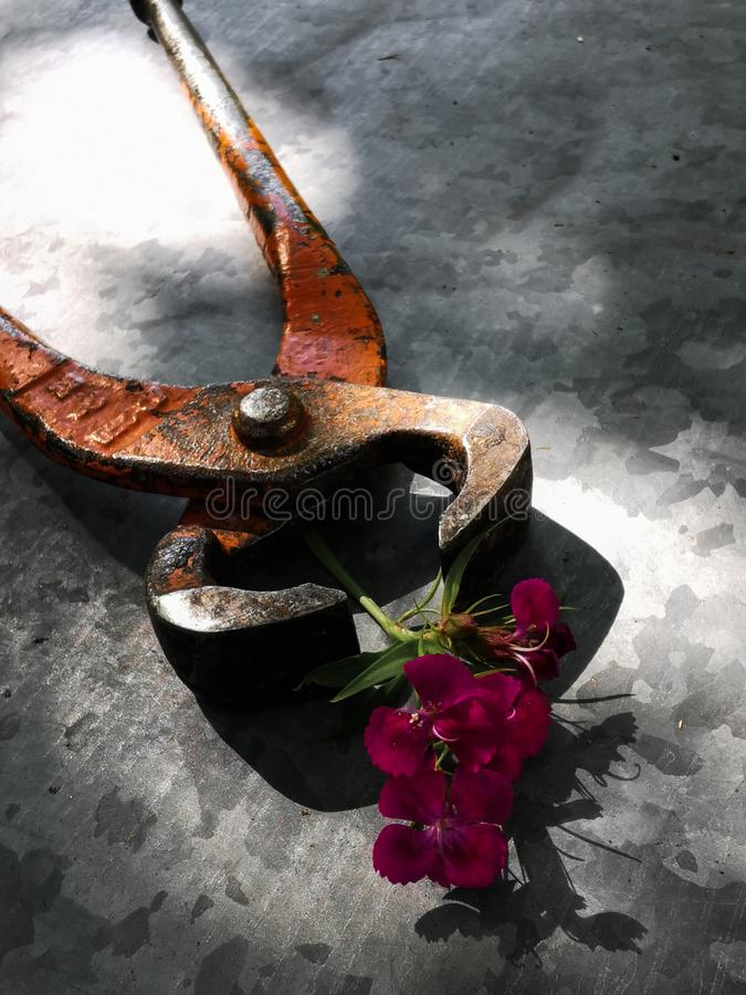 Claw hammer, pliers, and a flower. Set of different tools on metal background with flowers stock images
