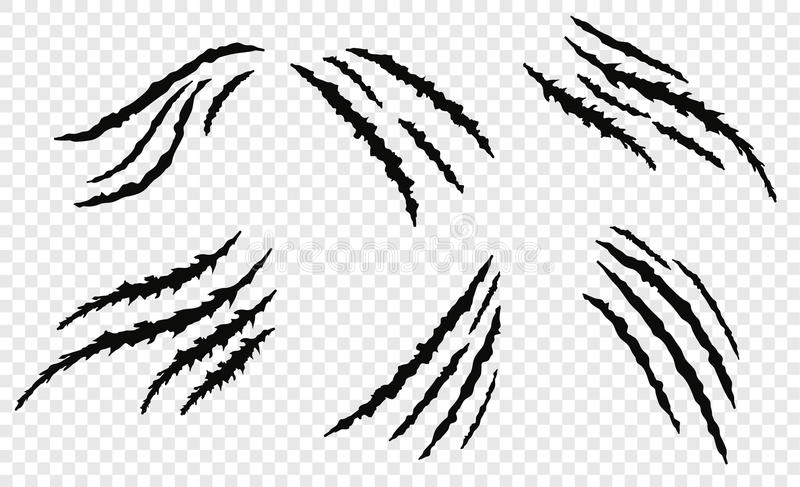 Claw vecror scratches. Realistic claw scratches on background. Vector illustration vector illustration