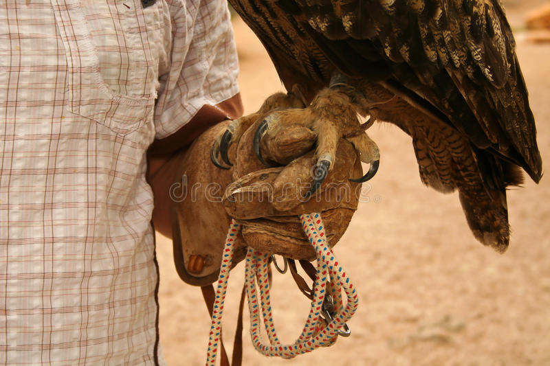 Claws of an eagle owl royalty free stock photography
