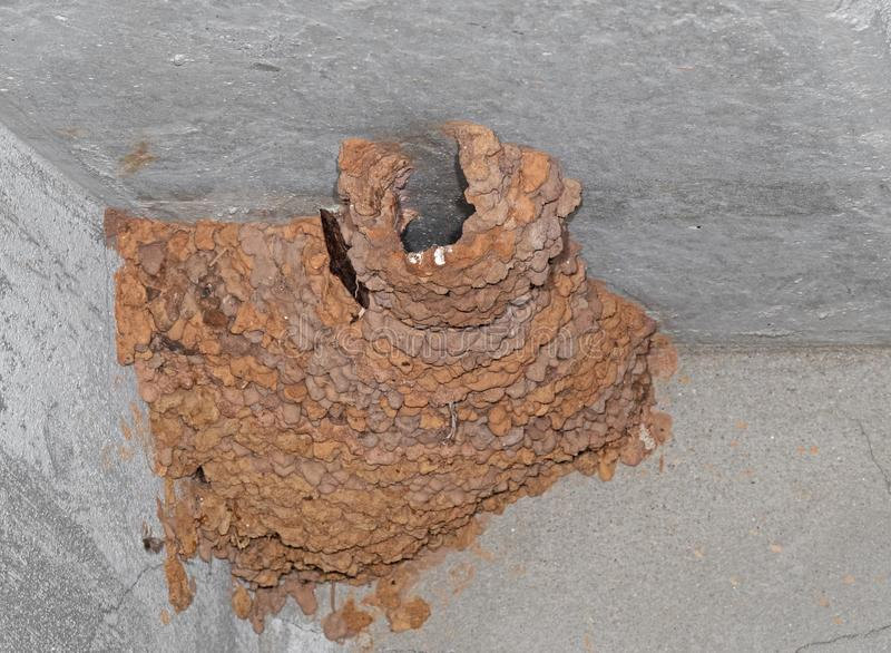 Clay Cliff Swallow Nest on The Ceiling royalty free stock photo