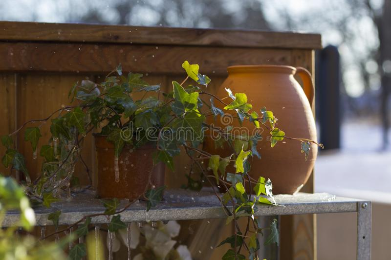 Clay pot and frozen ivy on a sinc shelf, in front of wooden wall with wintery landscape in the background. royalty free stock photo