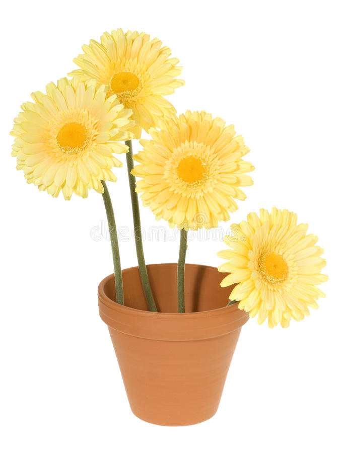 Clay Pot with Yellow Daisies stock images