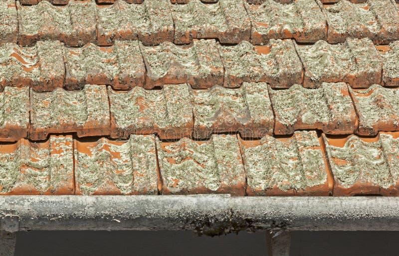 Download Clay Roof Tiles Covered I Lav Med Skalningsavloppsrännor Arkivfoto - Bild av form, underhåll: 76703774