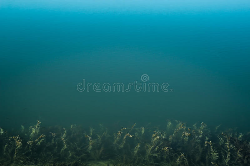 Clean blue water, sea weed royalty free stock image