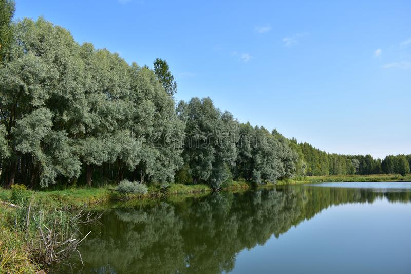 Clean and calm lake is located in the middle of the forest, the sky with its blue tint with white clouds is reflected in this quie royalty free stock images