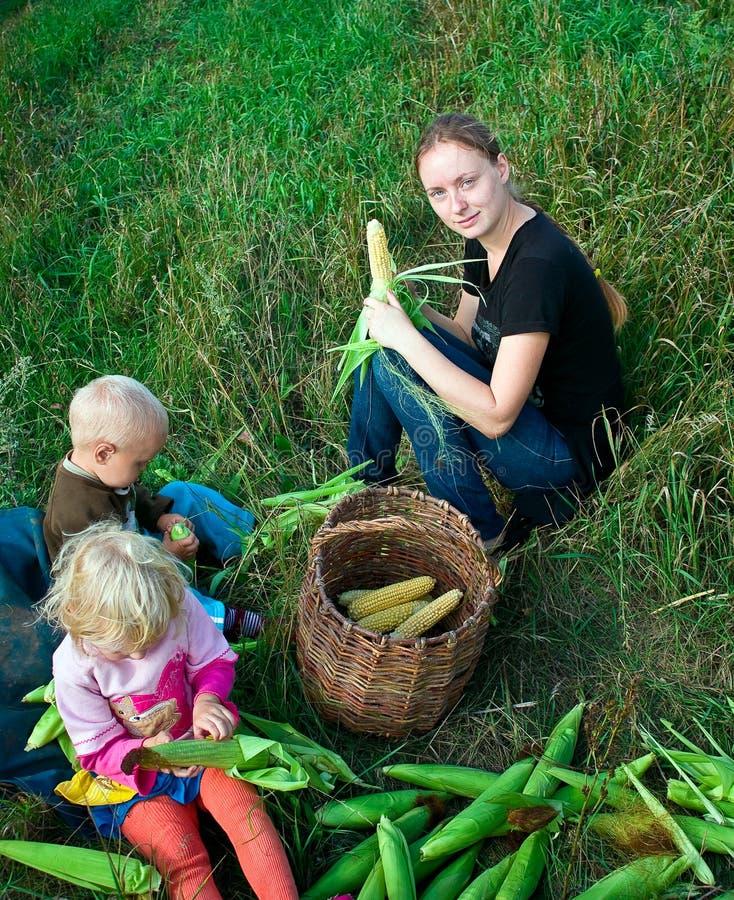 Free Clean Corn Royalty Free Stock Photo - 10868065