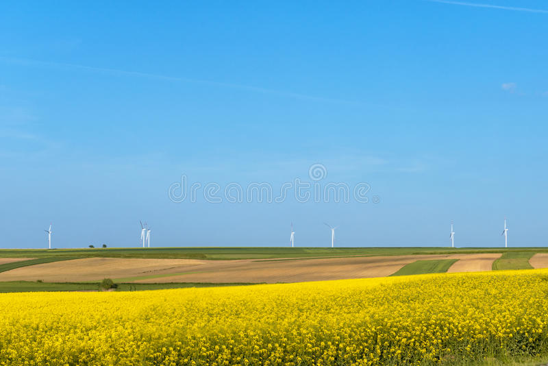 Clean energy in the spring. Flowers were yellowing the fields with wind farm in Poland royalty free stock image