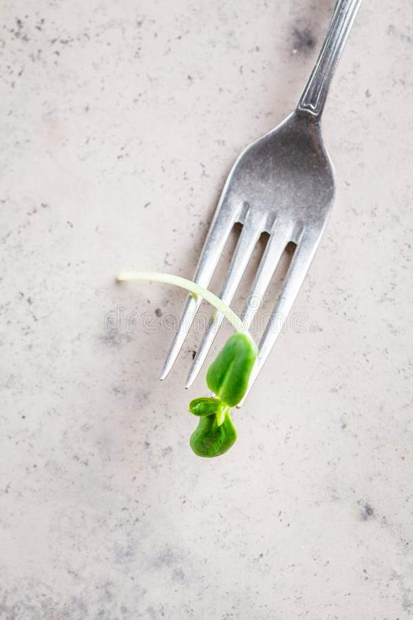 Clean fork with a sunflower seedling on gray background, copy space, top view. Diet concept, healthy eating, clean eating, vegan royalty free stock image