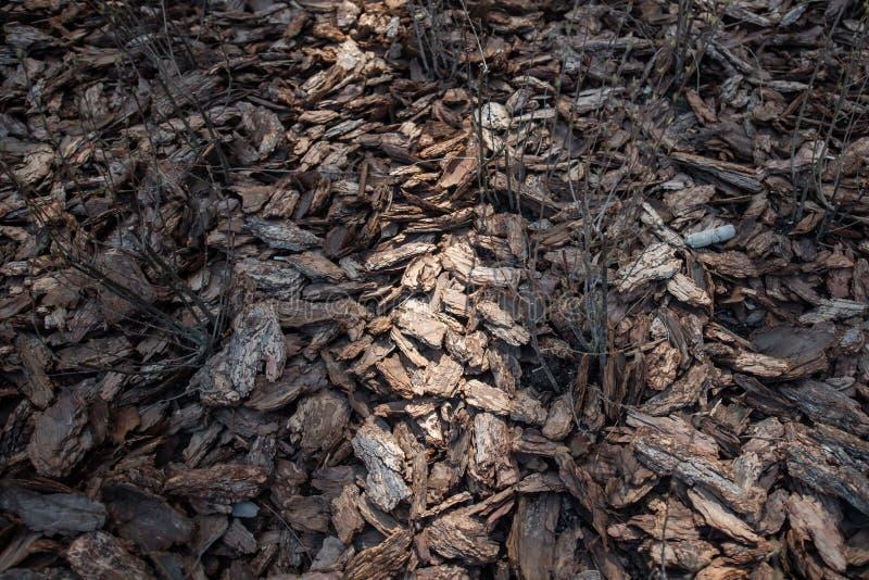 Clean, fresh, pine bark mulch beautifully illuminated by the sun stock image